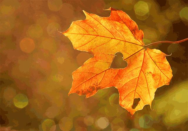 autumn style clothes