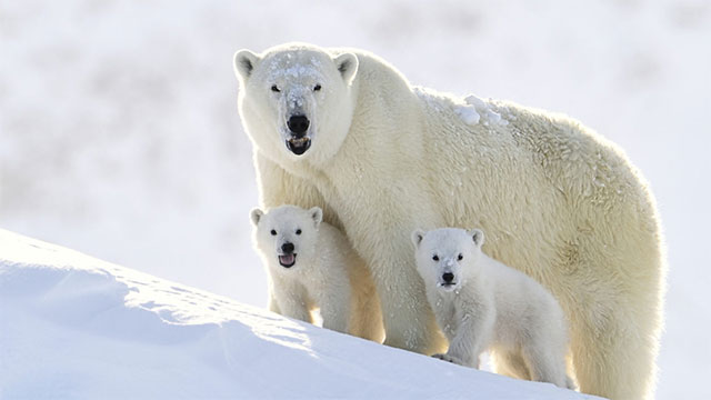 what kind of animals live in the North Pole
