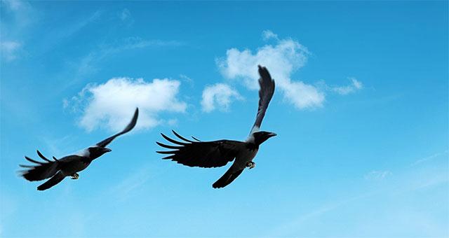 Birds Predict Weather