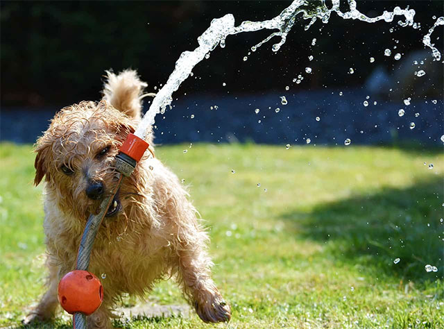 How to care for your dog in hot weather