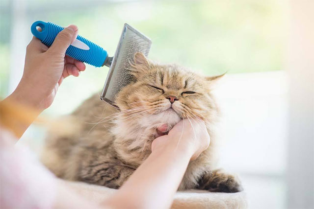 pet care in hot weather